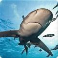 Ocean HD Wallpaper FREE