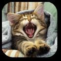 Pussycat Live Wallpaper (Free)
