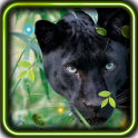 Panther Real live wallpaper