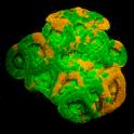 Coral RKV