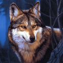 Wolf Jigsaw Puzzles
