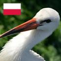 Polish Birds English Version