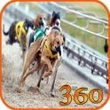 Dog Racing Track VR Wallpapers