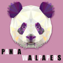 Panda Wallpapers