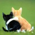 Meowversary