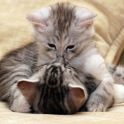 बिल्ली का बच्चा वॉलपेपर