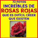 Fondos de Rosas Rojas