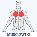 MuscleWiki Fitness