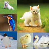 Animals & Birds Quiz