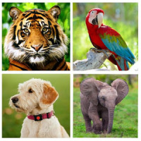 Animal Sounds - Animals for Kids, Learn Animals