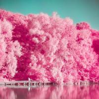 Analog Film Pink Camera-Palette,Photo editor,Paris