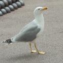 BirdsWallpaper