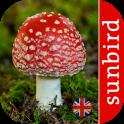 Mushroom Id