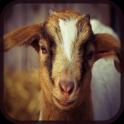 Barnyard Animal Games for Kids
