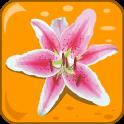 꽃 : 퀴즈
