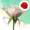Gravity Secret of Love Rose LWP