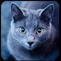 HD Cat Wallpaper