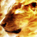 HD Fire Lion Wallpaper