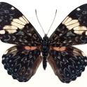 Moth Themes