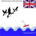 British Coastal Bird ID