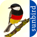 All Birds Germany - A Sunbird Field Guide