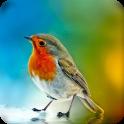 HD Live Bird Wallpaper