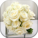 White roses wallpapers