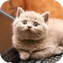 Lusy Cat Sounds Audio Free