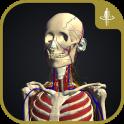 3D Motion Human Anatomy - teamLabBody