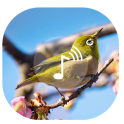 Bird Sound ~ Nature Sound HD