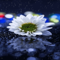 Rainy White Flower LWP