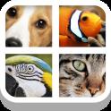 Close Up Animals
