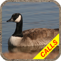 Goose hunting calls Pro. Waterfowl hunting decoy