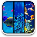 Aquarium statische wallpaper