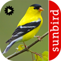 Bird Song Id USA Automatic Recognition songs calls