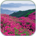HD Mountain Flower Wallpaper