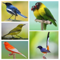 Top 1000 Kicau Burung Mp3