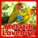 Melatih Lovebird