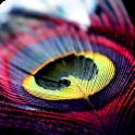 रंगीन पंख