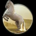Running Horse HD Wallpaper