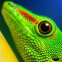 free lizard wallpaper