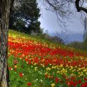 Tapete-Frühling