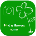 Find a flowers name (photo)
