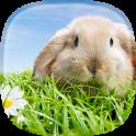 토끼 라이브 배경 화면