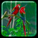 Попугай Живые обои