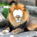 사자 사진 몽타주
