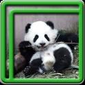 niedlichen Panda Live-Wallpape