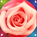 Pink Rose Live Wallpapers