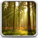 Sonnigen Wald Hintergrund