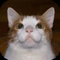 かわいい猫のHDの壁紙無料